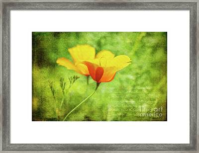 Togetherness Framed Print by Jutta Maria Pusl