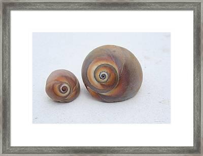 Togetherness Framed Print by Linda Sannuti