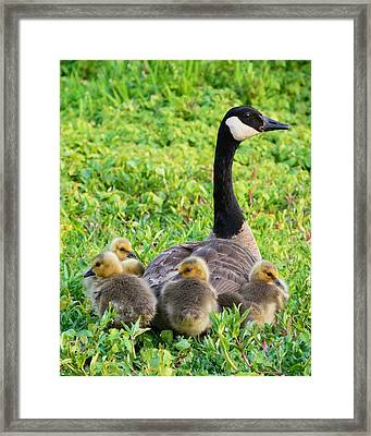 Togetherness Framed Print by Patrick Campbell