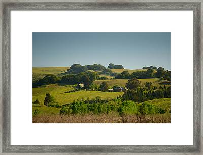 Tolay Lake Vineyard Framed Print by Catherine Pearson