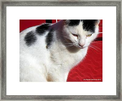 Tom Barn Cat  Framed Print