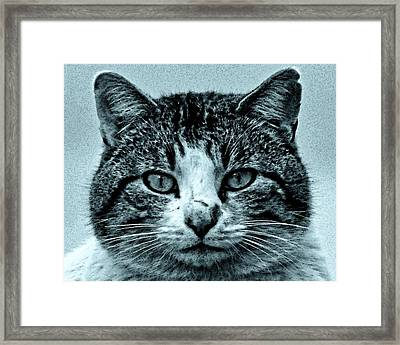 Tom Cat Framed Print