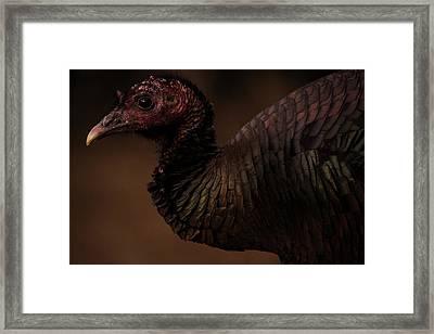 Tom Framed Print