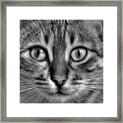 Tom Framed Print
