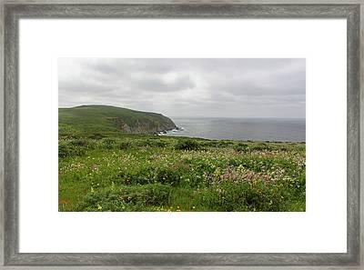 Tomales Point Flowers Framed Print by Sierra Vance