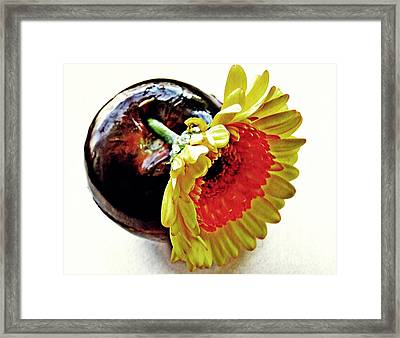 Tomato And Daisy Framed Print by Sarah Loft