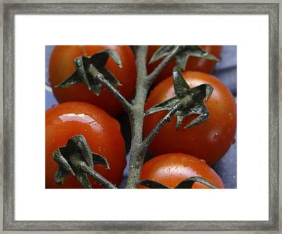 Tomato Framed Print by Angela Aird