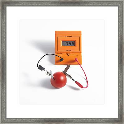 Tomato Battery Framed Print by Spl