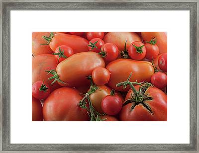 Framed Print featuring the photograph Tomato Mix by James BO Insogna