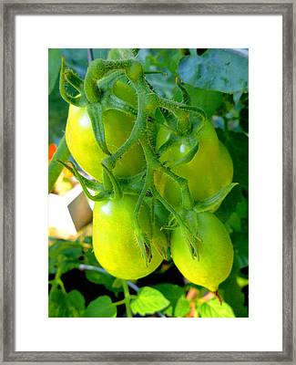 Tomato On Trees 7 Framed Print by Lanjee Chee