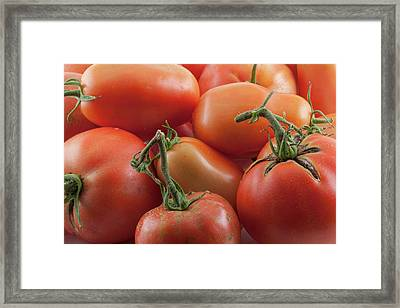 Framed Print featuring the photograph Tomato Stems by James BO Insogna