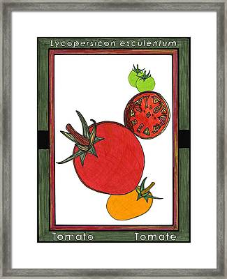 Tomato Tomate Framed Print by Baya Clare