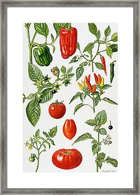 Tomatoes And Related Vegetables Framed Print by Elizabeth Rice