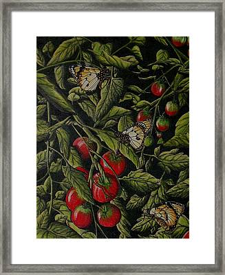 Tomatoes Framed Print by Joshua Armstrong