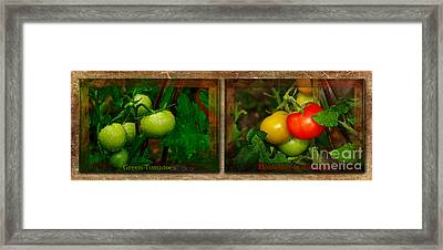 Tomatoes Kitchen Collage By Kaye Menner Framed Print