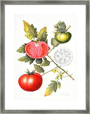 Tomatoes Framed Print by Margaret Ann Eden