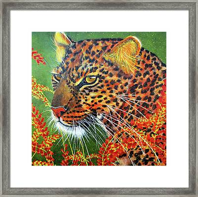 Tommy Framed Print by Debbie Chamberlin