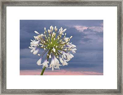 Tomorrow Is Another Day Framed Print