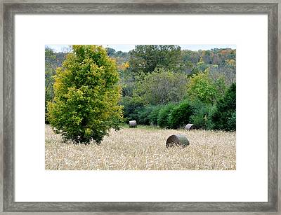 Tomorrow Never Knows Framed Print by Jan Amiss Photography