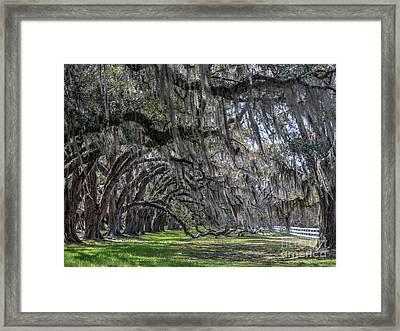 Tomotley Plantation Arches Framed Print