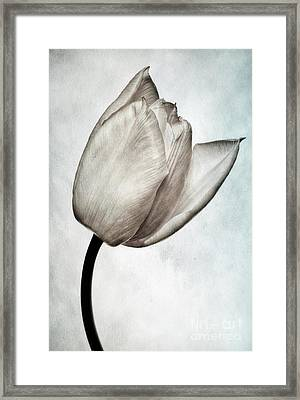 Toned Tulip Framed Print by John Edwards