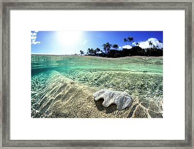 Tongan Clam Shell. Framed Print