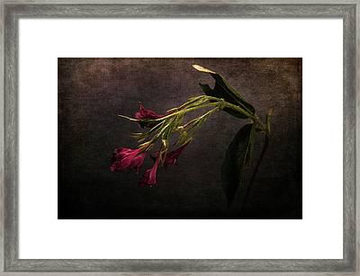 Framed Print featuring the photograph Toning Down by Randi Grace Nilsberg