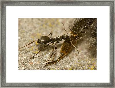 Too Big Catch Framed Print by Jouko Mikkola