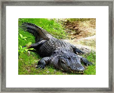 Too Close Framed Print