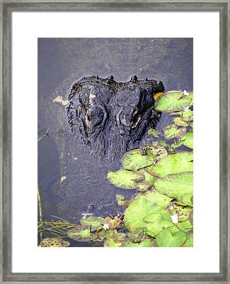 Too Close For Comfort Framed Print by Ed Smith