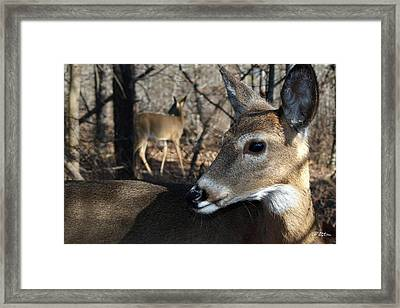 Too Cool Framed Print by Bill Stephens