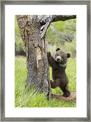 Too Cute For Words Framed Print by Melody Watson