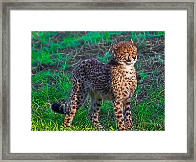 Too Cute Framed Print