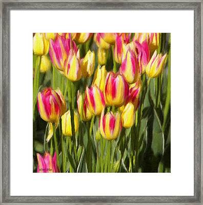 Too Many Tulips Framed Print
