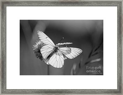 Too Many Wings Framed Print