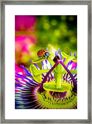 Framed Print featuring the photograph Too Much Of Heaven by TC Morgan