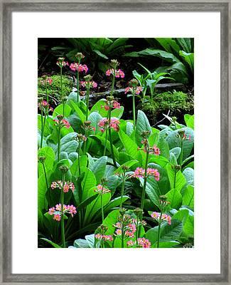 Too Pretty Framed Print by Deborah  Crew-Johnson