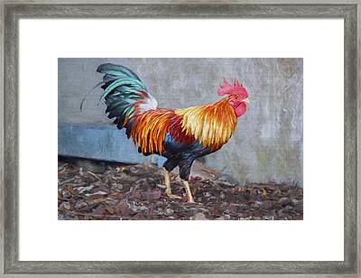 Too Sexy For My Feathers Framed Print