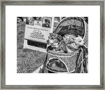 Too Small Framed Print by Mary Chris Hines