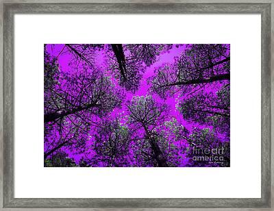 Too Tall Etream Pine Tree Art Framed Print by Reid Callaway