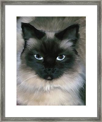 Framed Print featuring the photograph Tootie by Carol Kinkead