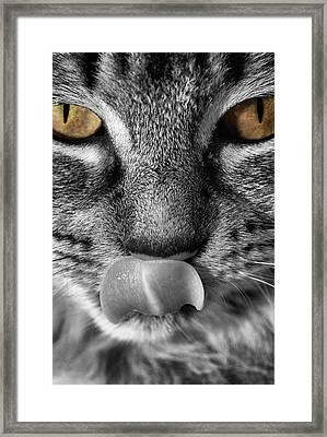 Toots3 Framed Print by Fraser Davidson