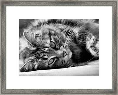 Toots4 Framed Print by Fraser Davidson