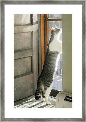 Tip Toe Cat Framed Print by Diana Angstadt