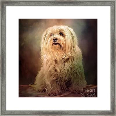 Top Dog Framed Print