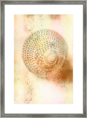 Top Down View Of Spiral Sea Shell Framed Print