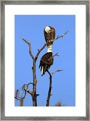 Top Floor Advantage Framed Print by David Yunker