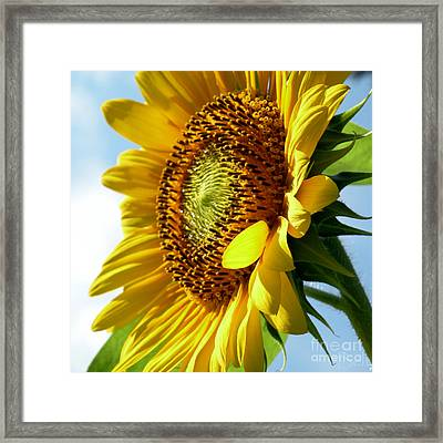 Top Of The Morning Framed Print by Christine Belt