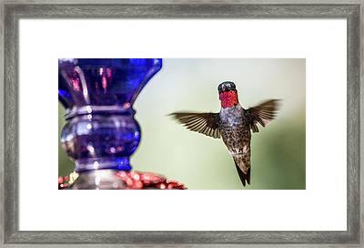 Top Of The Morning To You Framed Print