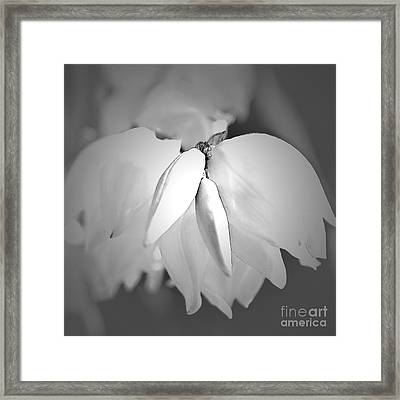 Top Of The Yucca Plant In Black And White Framed Print
